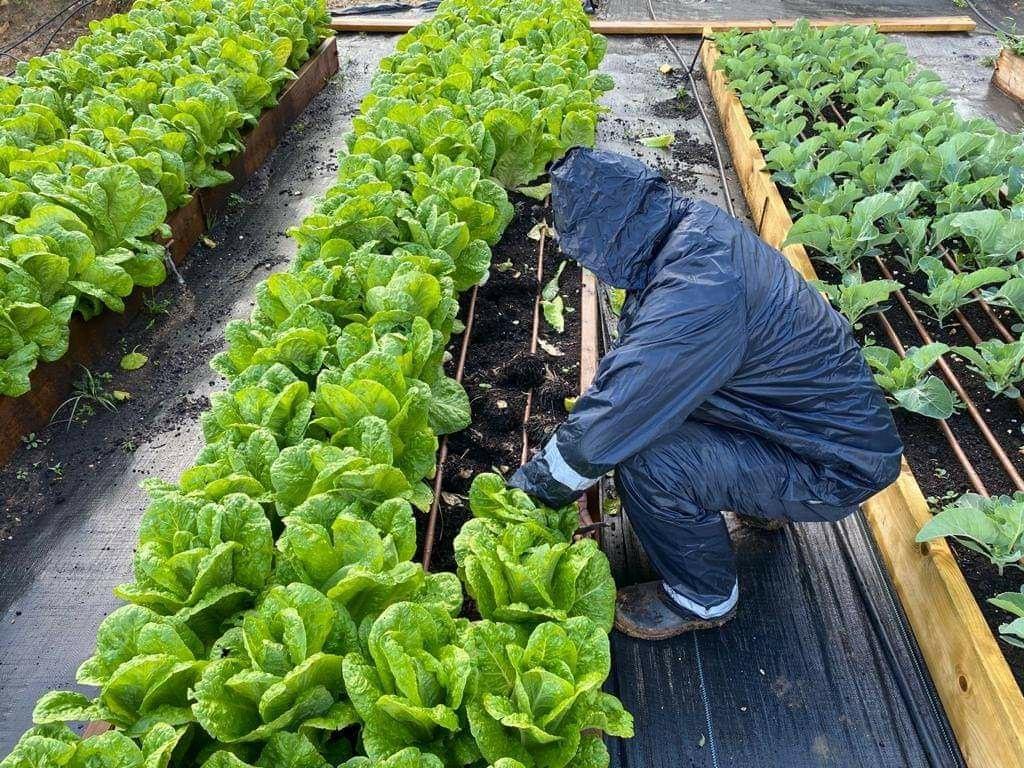 דרייב אין ירקות בחווה החקלאית
